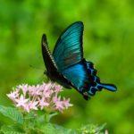 蝶と蛾の違いとは!明確に区別はできないってホント?